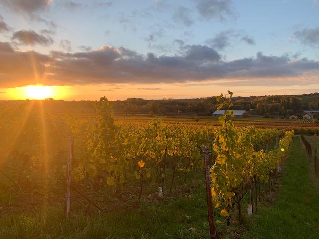 Fliegend zum nachhaltigen Weinbau